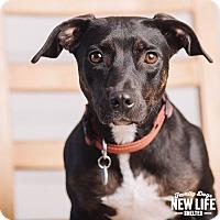 Adopt A Pet :: Jazzy - Portland, OR
