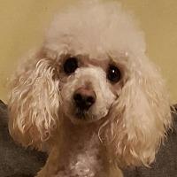 Adopt A Pet :: Peanut - Alpharetta, GA