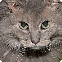 Adopt A Pet :: Boss - Medina, OH