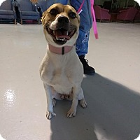 Adopt A Pet :: BEAUTY! - Owenboro, KY