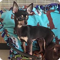 Adopt A Pet :: Queso - York, SC