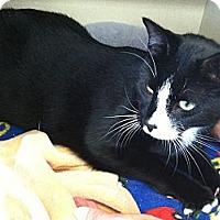 Adopt A Pet :: Alabama - Riverhead, NY