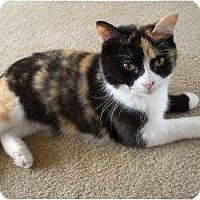 Adopt A Pet :: Cally - Richmond, VA