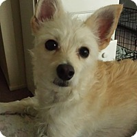 Adopt A Pet :: Cookie--courtesy post - Valley Springs, CA