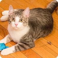 Adopt A Pet :: Doobie - Chicago, IL
