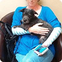 Adopt A Pet :: Jackson- Cracker Jax - Houston, TX