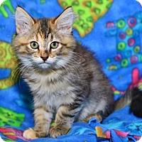Adopt A Pet :: Brandy - Davis, CA