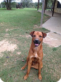 Retriever (Unknown Type) Mix Dog for adoption in Madisonville, Texas - Red