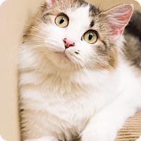 Adopt A Pet :: Mia - Chicago, IL