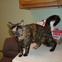 Adopt A Pet :: Tris - Montello, WI