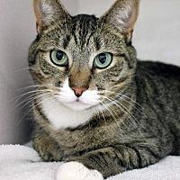 Adopt A Pet :: Indigo - Paris, ME