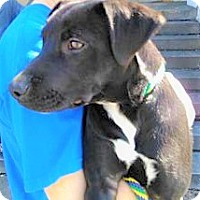 Adopt A Pet :: Dak - Allentown, PA