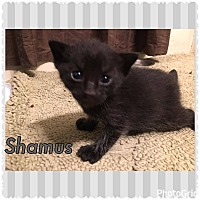 Adopt A Pet :: Shamus - Jerseyville, IL