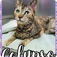 Adopt A Pet :: Calypso - Edwards AFB, CA
