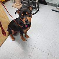 Adopt A Pet :: Odin - Surrey, BC