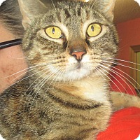 Adopt A Pet :: Ellie May - Reeds Spring, MO