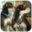 Photo 3 - Schnauzer (Standard)/Dachshund Mix Dog for adoption in Los Angeles, California - Tanner & Jordan