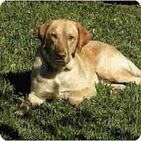 Adopt A Pet :: Trooper - Kingwood, TX