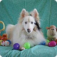 Adopt A Pet :: Grace - Abingdon, MD