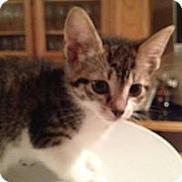 Adopt A Pet :: Sophia - East Hanover, NJ