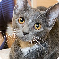 Adopt A Pet :: Rachel - Irvine, CA