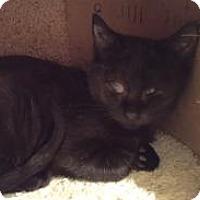 Adopt A Pet :: Rookie - East Hanover, NJ