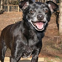Adopt A Pet :: Andy - Greenville, SC