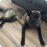 Adopt A Pet :: Ford - Saskatoon, SK