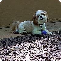Adopt A Pet :: Cody - more info coming - Norwalk, CT