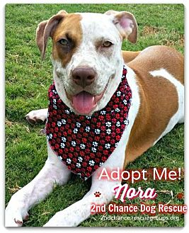 Cattle Dog Mix Puppy for adoption in Queen Creek, Arizona - Nora