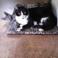 Adopt A Pet :: Dexter - Lauderhill, FL