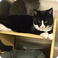 Adopt A Pet :: York - Colmar, PA