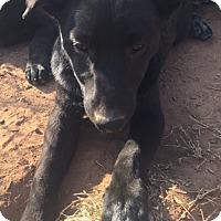 Adopt A Pet :: Janet meet me 3/10 - Manchester, CT