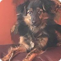 Adopt A Pet :: Odie - Grand Rapids, MI