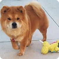 Adopt A Pet :: Cash & China - Sacramento, CA