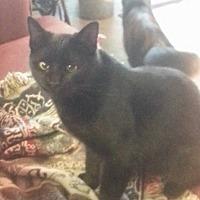 Adopt A Pet :: Sammi - Hartford, KY