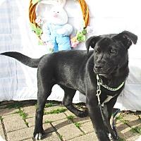 Adopt A Pet :: Lilium - West Chicago, IL