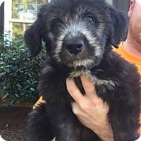 Adopt A Pet :: Sampson - Mobile, AL