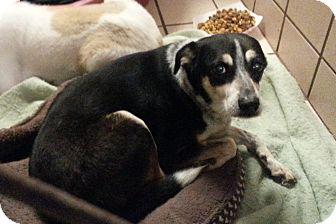 Australian Cattle Dog Mix Dog for adoption in San Antonio, Texas - Birdie