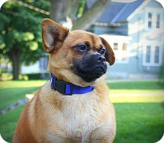 Pug/Beagle Mix Dog for adoption in Albert Lea, Minnesota - Pugsly