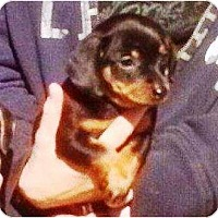 Adopt A Pet :: Ben & Jerry - Duluth, GA