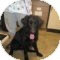 Adopt A Pet :: Toby - Denver, CO