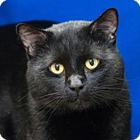 Adopt A Pet :: Nanaimo - Calgary, AB