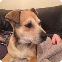 Adopt A Pet :: Liam - nashville, TN