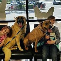 Adopt A Pet :: Shepie & T.  * - La Honda, CA
