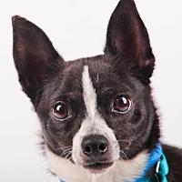 Adopt A Pet :: Buster - Colorado Springs, CO