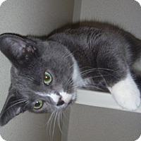 Adopt A Pet :: Sylvester - Hamburg, NY