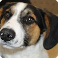 Adopt A Pet :: Earl - Avon, NY