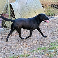 Adopt A Pet :: Margo - Rock Hill, SC
