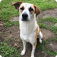 Adopt A Pet :: Raisin - New York, NY